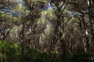 पिसावा के जंगल,उत्तर प्रदेश (Pisawa Forest)