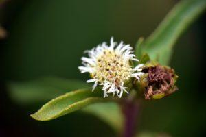 वाइल्डफ्लावर फोटोग्राफी (Wildflower Photography in Hindi)